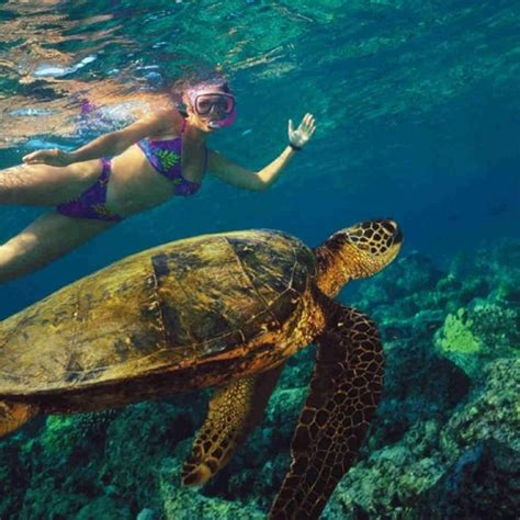 Tiami Catamaran Cruises Barbados Bridgetown by 53 Best Tiami Catamaran Cruises Barbados Images On