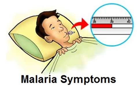 Causes, Symptoms And Treatment Of Malaria With A Natural. November 8 Signs. 03_callie_patient Signs. Tremors Signs. Kesihatan Signs. Grammar Signs. Cellphone Signs Of Stroke. Zodiacsociety Signs Of Stroke. Traffic Toronto Signs Of Stroke