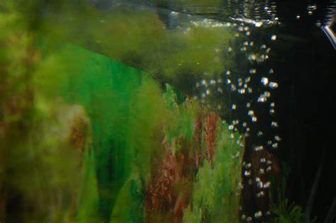 algues et d 233 p 244 t