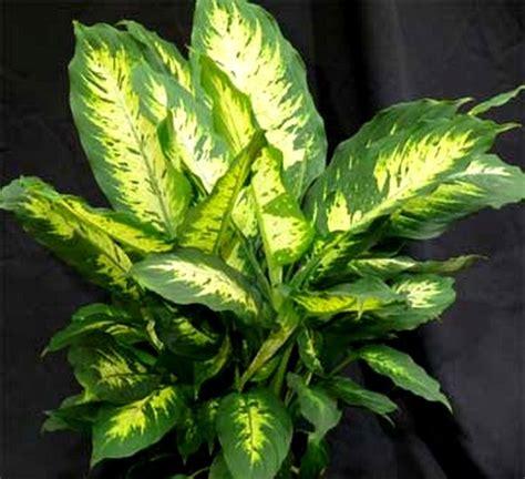 plante verte d int 233 rieur d 233 polluante images