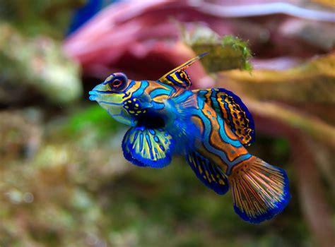 fish n tips