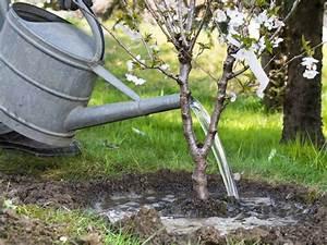 Dekorative Bäume Für Kleine Gärten : b ume f r kleine g rten das passt perfekt ans haus leonhards ~ Markanthonyermac.com Haus und Dekorationen