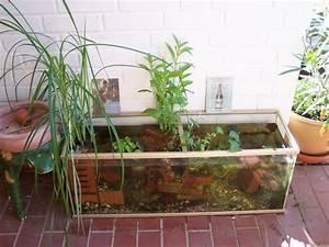 Balkon Sauber Machen : bepflanzung kleiner teich mein sch ner garten forum ~ Markanthonyermac.com Haus und Dekorationen