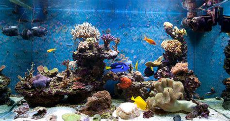 aquarium eau de mer caract 233 ristiques comprendrechoisir