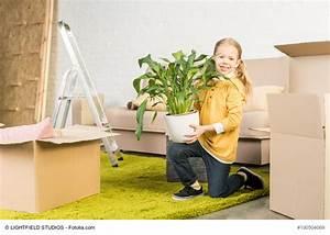 Möbel Transportieren Tipps : umzug mit pflanzen richtig verpacken transportieren und akklimatisieren ~ Markanthonyermac.com Haus und Dekorationen