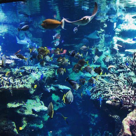 plongeon dans les aquariums de la cit 233 de la mer escale de nuit