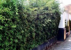 Bambus Im Garten : bambus im garten entdecken sie algarve ~ Markanthonyermac.com Haus und Dekorationen