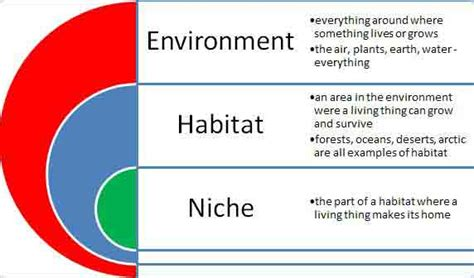 """Difference Between """"habitat"""" And """"niche""""– Explained"""