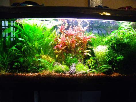 modification de mon aquarium 120 litres