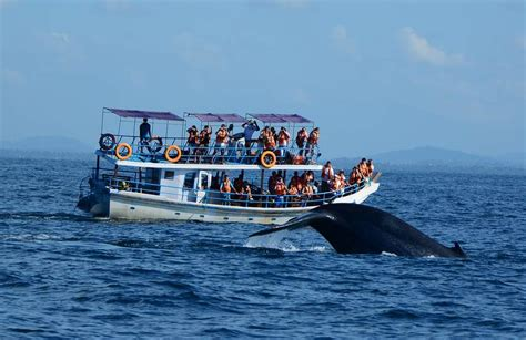 Monterey Whale Watching Boats by Tips For Safe Whale Watching Don T Be Caught Off Guard
