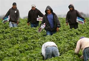 Entitled Black Americans Angry Mexicans Hired as Farm ...