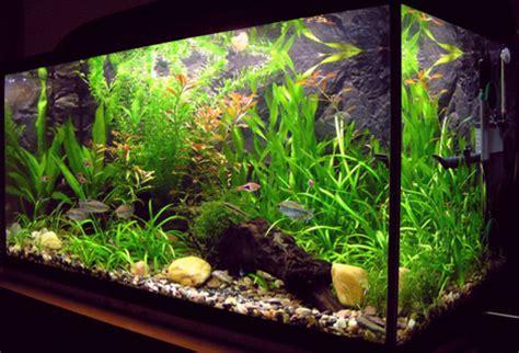 aquarium eau douce chaude debutant