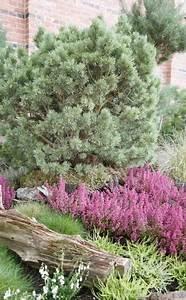 Baum Für Schattigen Vorgarten : die besten 25 heidegarten ideen auf pinterest riesen osterbasteleien und jungschar spiele ~ Markanthonyermac.com Haus und Dekorationen