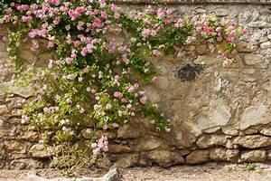 Kletterrosen Richtig Pflanzen : kletterrosen alles wissenswerte auf einen blick ~ Markanthonyermac.com Haus und Dekorationen