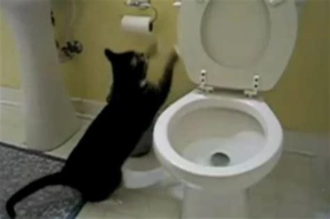 cat flushing the toilet song popsugar