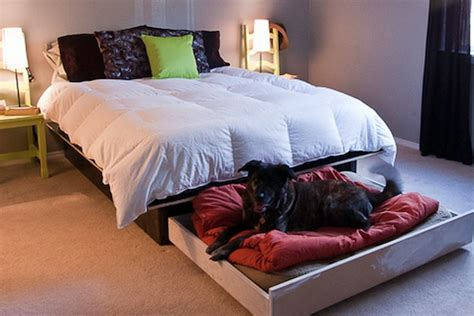 Hidden Slide Out Bed Under Your Bed For Your Dog  Tiny. Acacia Wood Coffee Table. Blue Table Runner. Desk Dresser Combo Ikea. Black Glass L Shaped Desk. Rectangle Kitchen Table And Chairs. Poker Table Tops. Treadmill Desk Costco. Xl Twin Bed Frame With Drawers