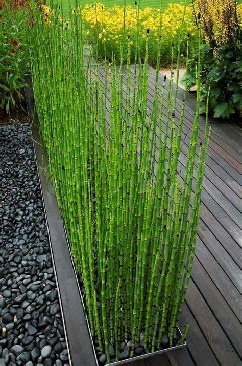 les 25 meilleures id 233 es de la cat 233 gorie bambou sur id 233 es bambou design de bambou et