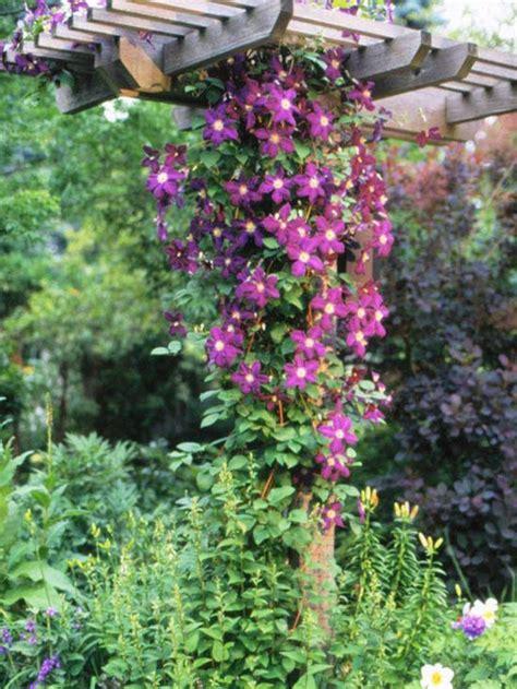 192 Best Deerresistant Plantsflowers Images On Pinterest