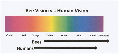 are bees color blind how bees see and why it matters bee culture