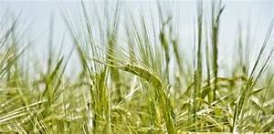 Opinion: GM crops already feed much of the world today ...