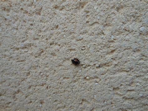 un h 244 tel pour les insectes cabane 224 insectes page 2