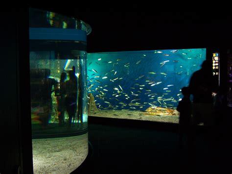 file aquarium de la rochelle bassins 003 jpg wikimedia commons