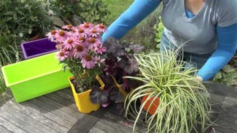 plantes vivaces en jardini 232 re conseils en vid 233 o