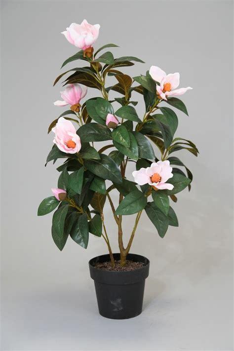 bloeiende planten en plantjes colours green