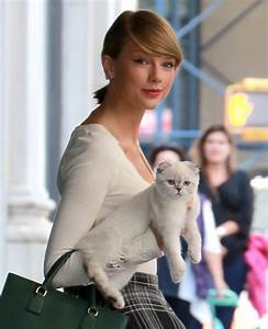 Cele bitchy   Taylor Swift brings her kitty Olivia out in ...