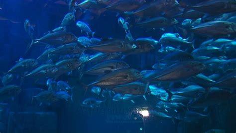 affluence 224 l aquarium du trocad 233 ro
