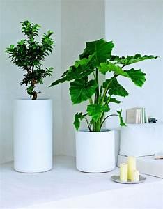 Feng Shui Pflanzen Reichtum : feng shui pflanzen f r harmonie und positive energie im wohnraum ~ Markanthonyermac.com Haus und Dekorationen