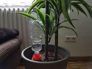 Pflanzen Bewässern Mit Plastikflasche : das beste bew sserungssystem f r zimmerpflanzen schlauer wohnen ~ Markanthonyermac.com Haus und Dekorationen