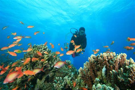 offrez vous une semaine de plong 233 e sous marine envie d envies sofinco et le figaro