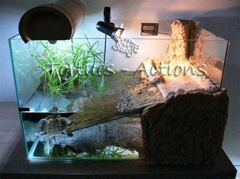 d 233 co aquarium pour tortue