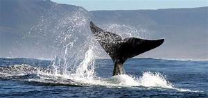 The Garden Route, one of South Africa's greatest holiday ...