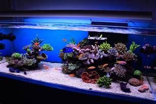 reef aquascaping on reef aquarium saltwater tank and saltwater aquarium