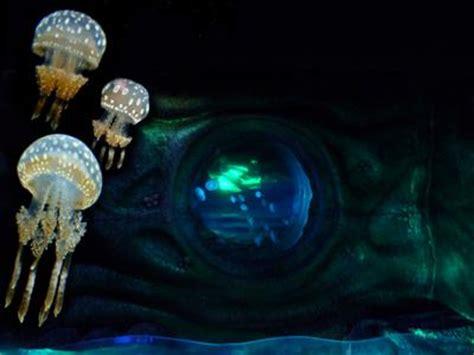 aquarium sea val d europe marne la vall 233 e l officiel des spectacles