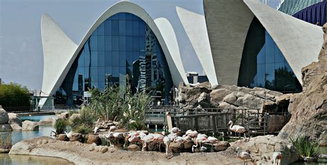 oceanogr 224 fic visitez le plus grand aquarium d europe expat valencia