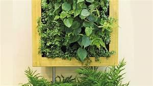 Pflanzen An Der Wand : eine gr ne wand pflanzen so funktionieren vertikale g rten ~ Markanthonyermac.com Haus und Dekorationen