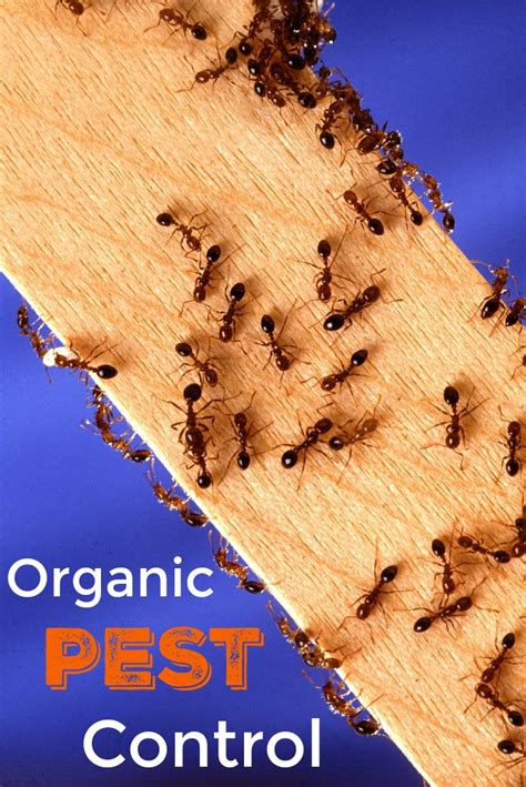 Organic Pest Control A Guide For Protecting Your Home And