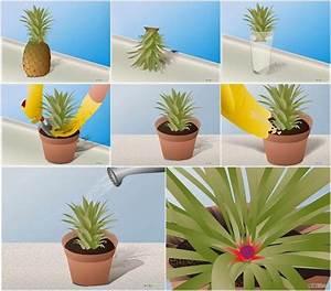 Pfeffer Pflanze Selber Züchten : eine ananas selber z chten urban gardening pinterest z chten hausarbeit und pflanzen ~ Markanthonyermac.com Haus und Dekorationen