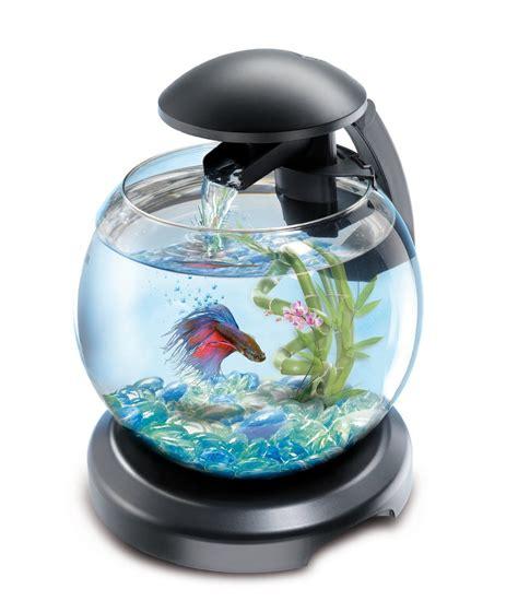 poisson d aquarium archives poisson naturel
