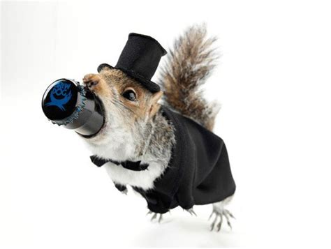 Sink The Bismarck Squirrel by Brewdog Unveils World S Strongest And Most Expensive