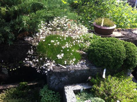 alpine plants and hypertufa pots rooting for ideas