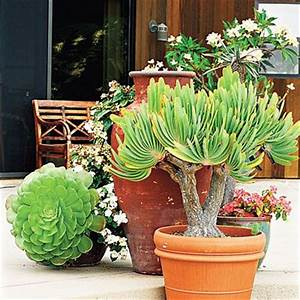 Gardens, Trees and Container plants on Pinterest