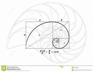 Verhältnis Goldener Schnitt : goldener schnitt und oberteil zeichnen auf wei vektor vektor abbildung bild 70058034 ~ Markanthonyermac.com Haus und Dekorationen