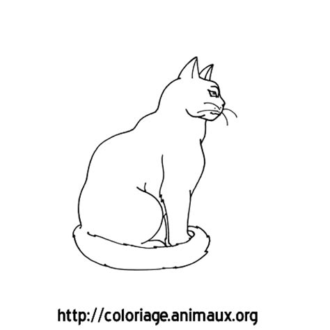 chat de profil coloriage chat de profil sur coloriage animaux org
