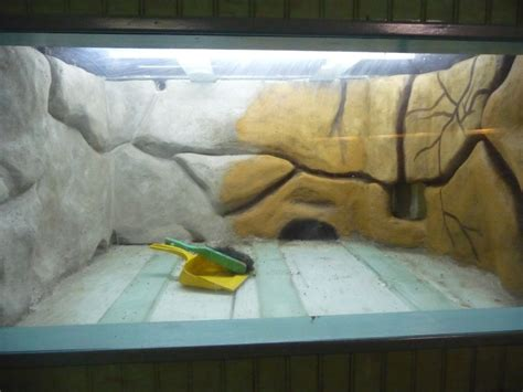 photo d 233 co aquarium pas cher