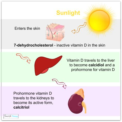 why we need uv light vitamin d deficiency sources of vitamin d