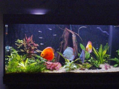 d 233 cor aquarium pour discus 224 voir